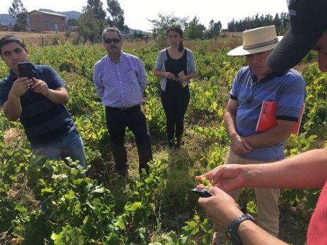 Apoyan a viñateros del Valle del Itata en el desarrollo de vinos de alta calidad (Tribuna del Biobío.cl – 16/04/2018)